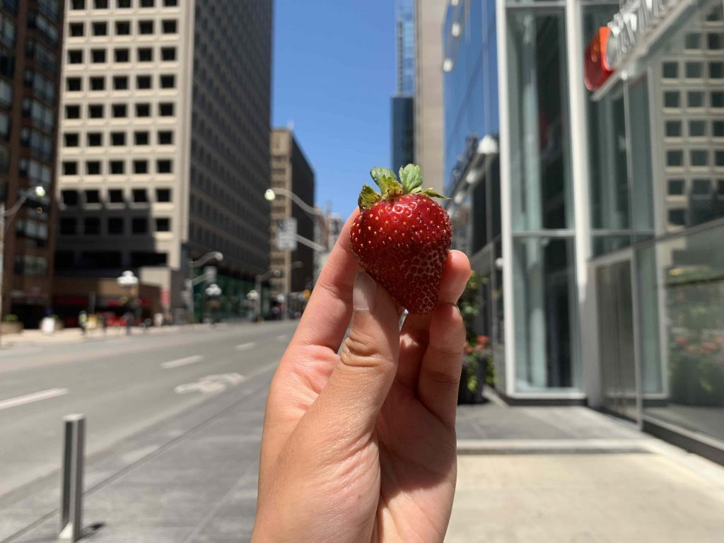 a single strawberry raised against the Toronto downtown horizon