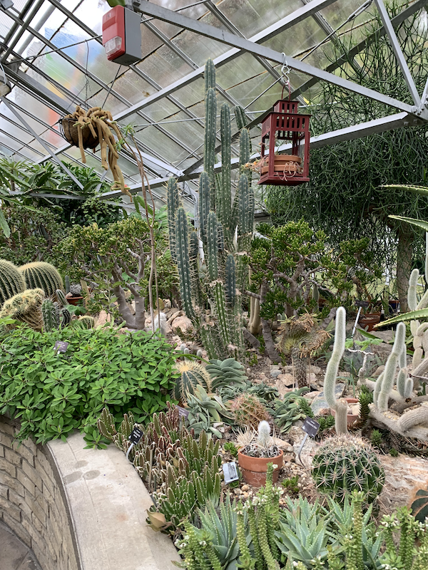 large cacti and birdbox handing from a wire