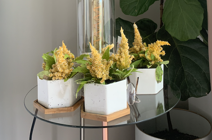 three planters with yellow flowers on a bedside table