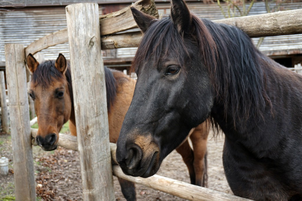photo of a black horse and a light brown horse
