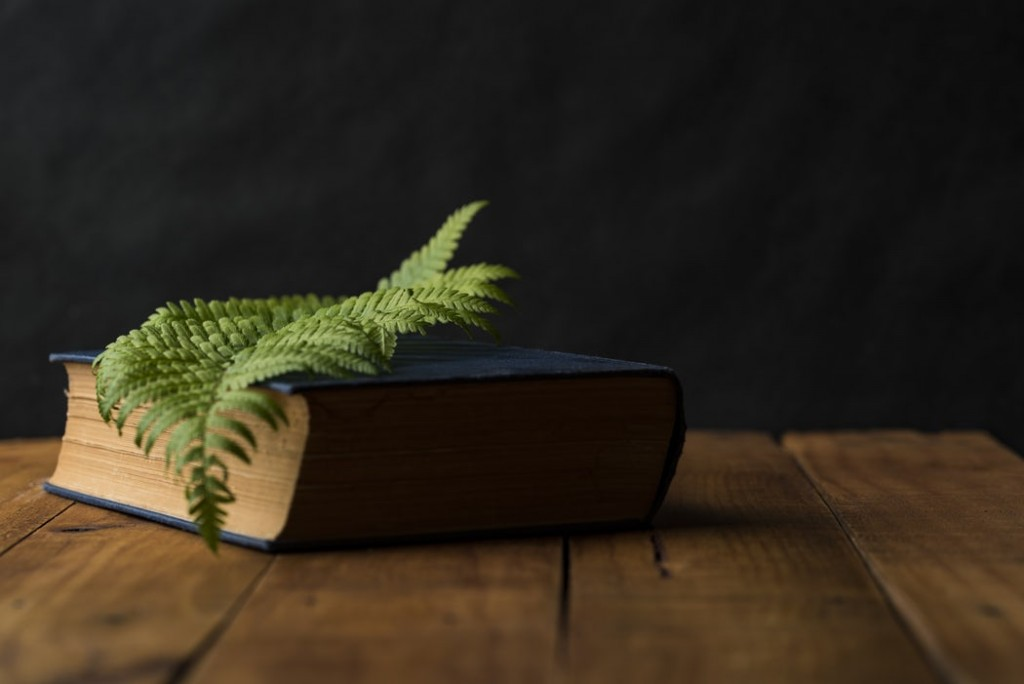 Book with a leaf on it