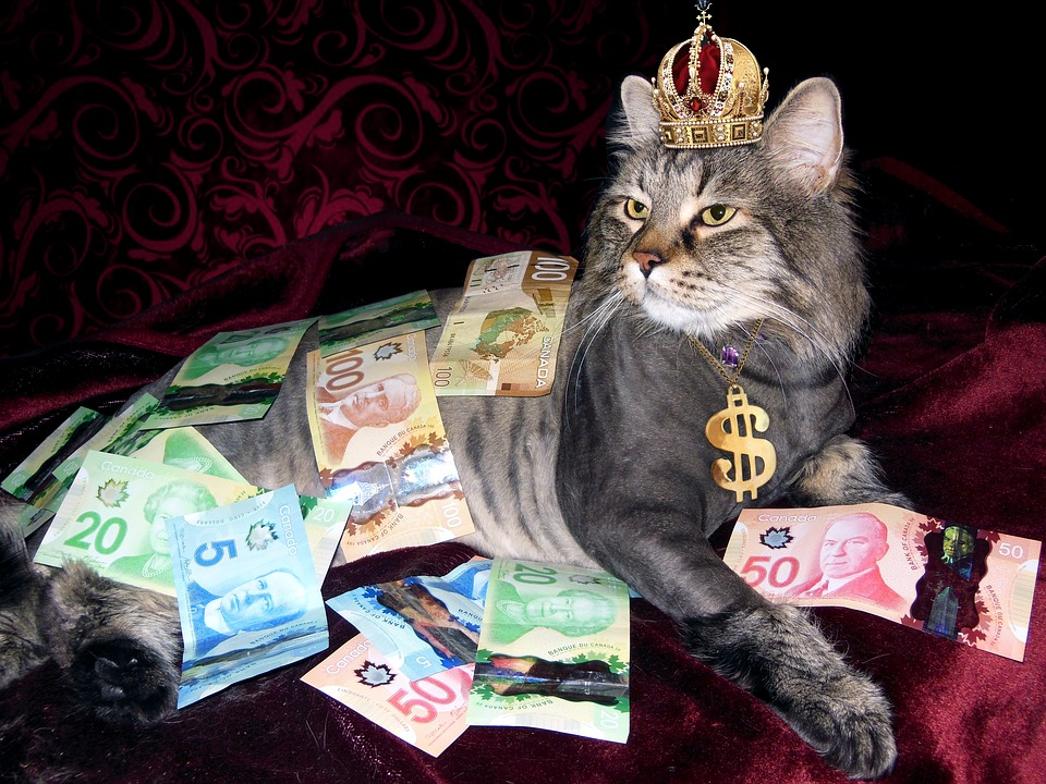 Photo of cat covered in Canadian money