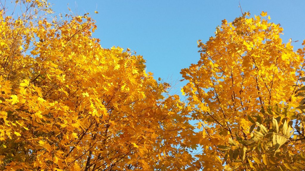 brightly colored trees