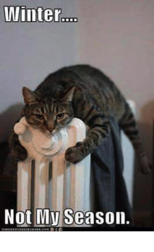 Cat hugging a radiator