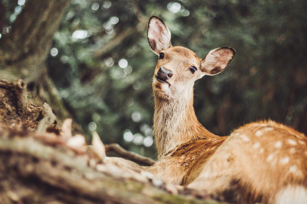 A real-life deer!