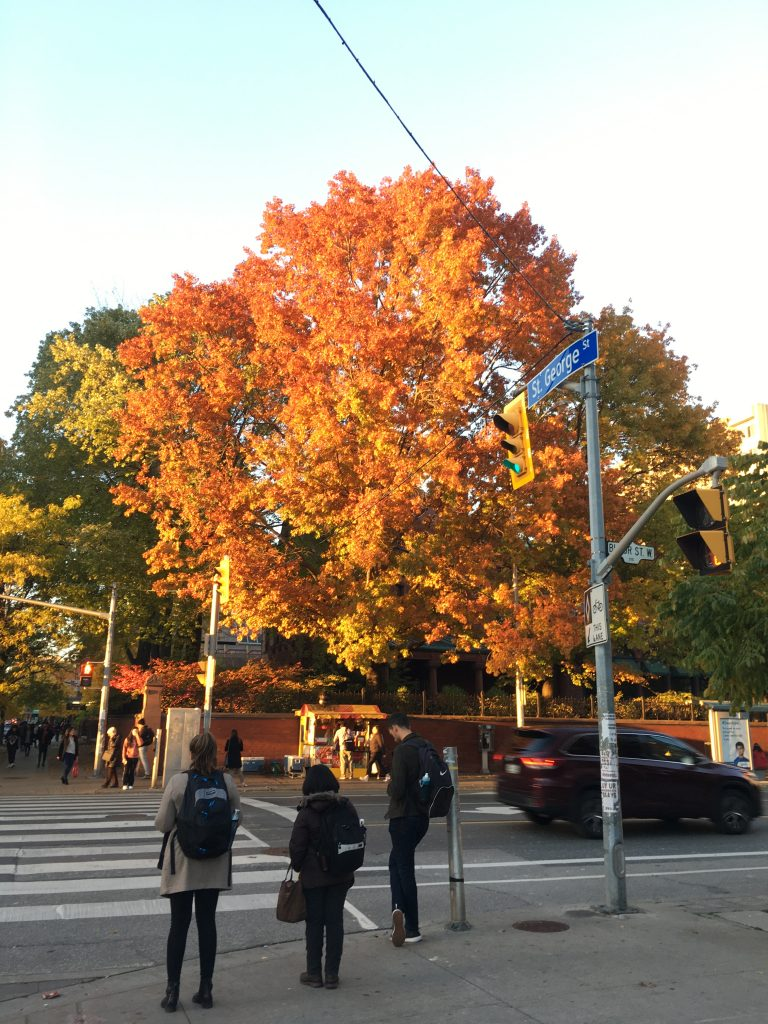 A red-and-gold tree in fall.
