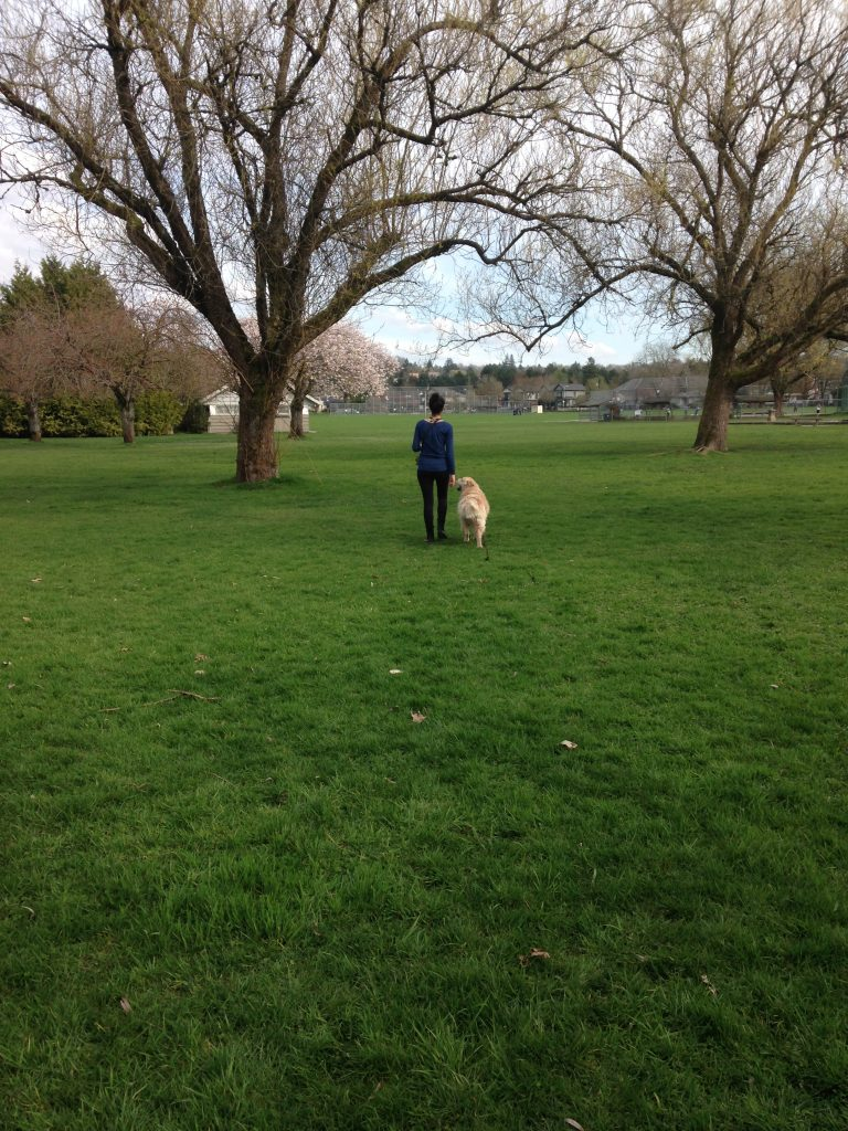 A person and a dog walking in a park.