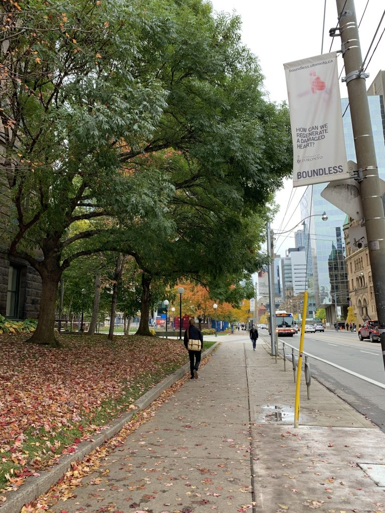 a pathway at U of T