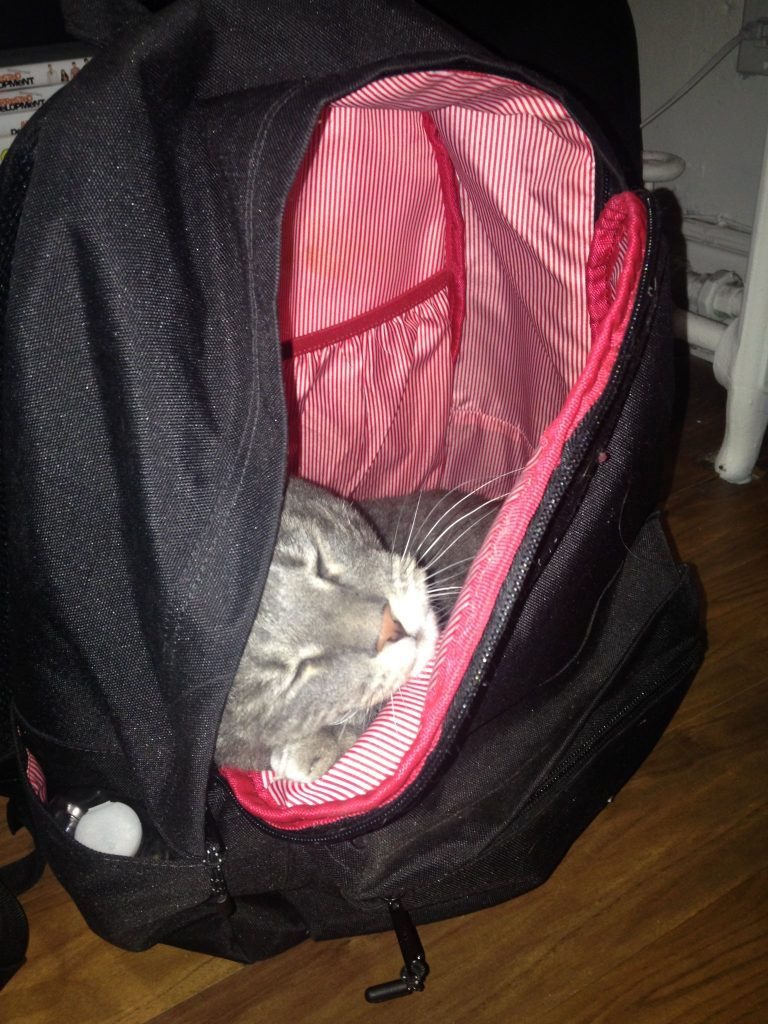 A picture of a grey cat hidden within a backpack