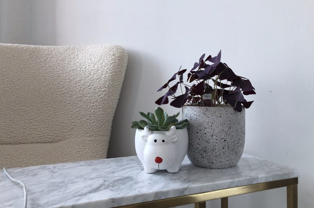 photo of a potted succulent and a potted oxalis plant on a marble side table